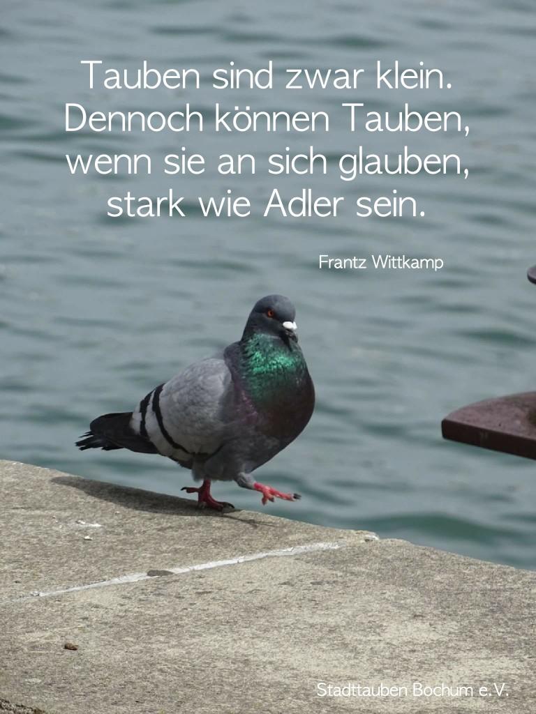 Stark wie Adler