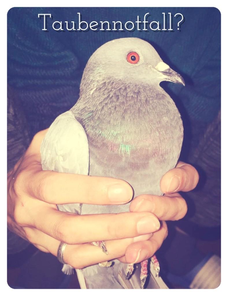 Taubennotfall